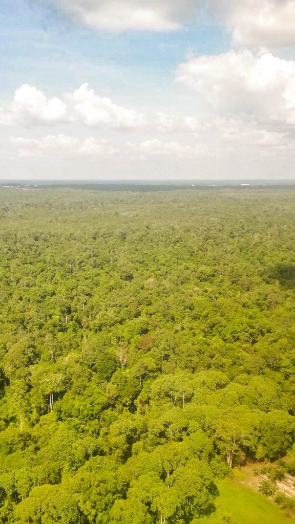 3 días en klotok en la selva de Borneo