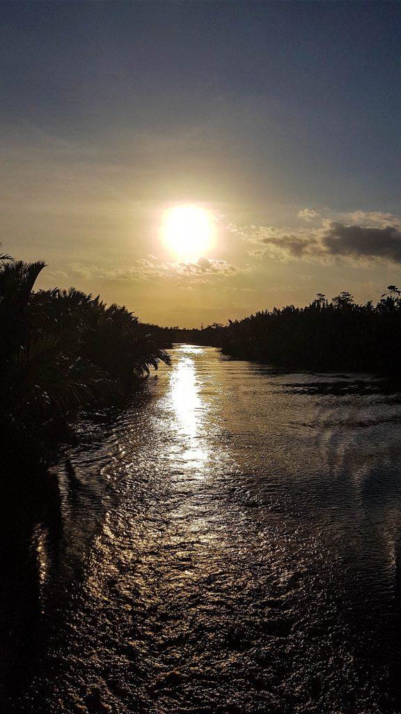 Atardecer en la selva de Borneo