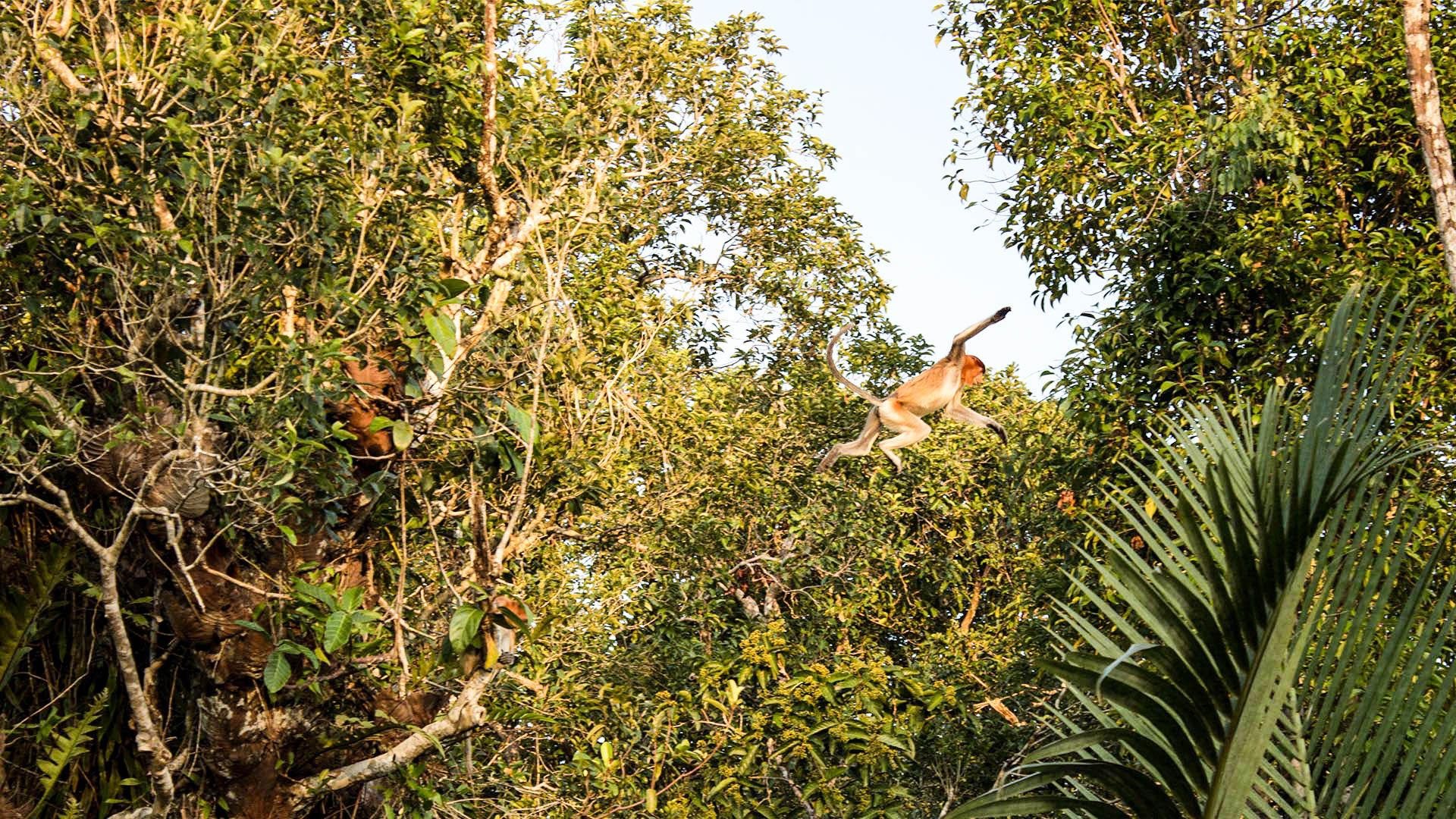 Saltando entre los árboles