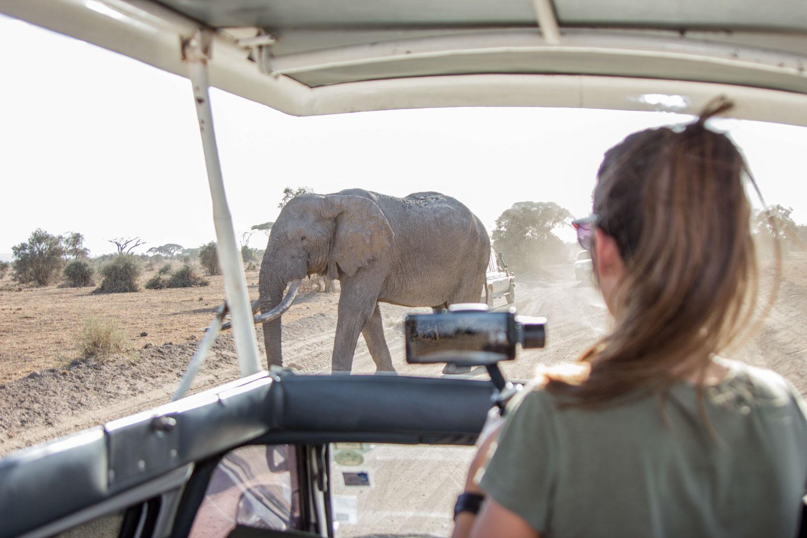 Elefante cruzando el camino, Parque Nacional de Amboseli, Kenia
