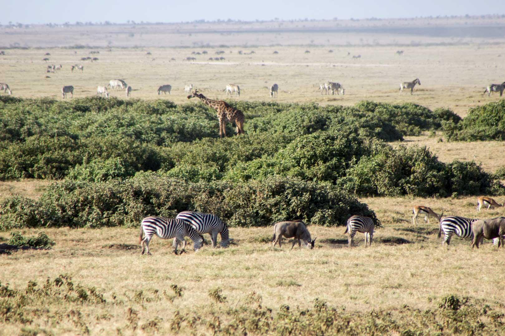 Parque Nacional de Amboseli, Kenia