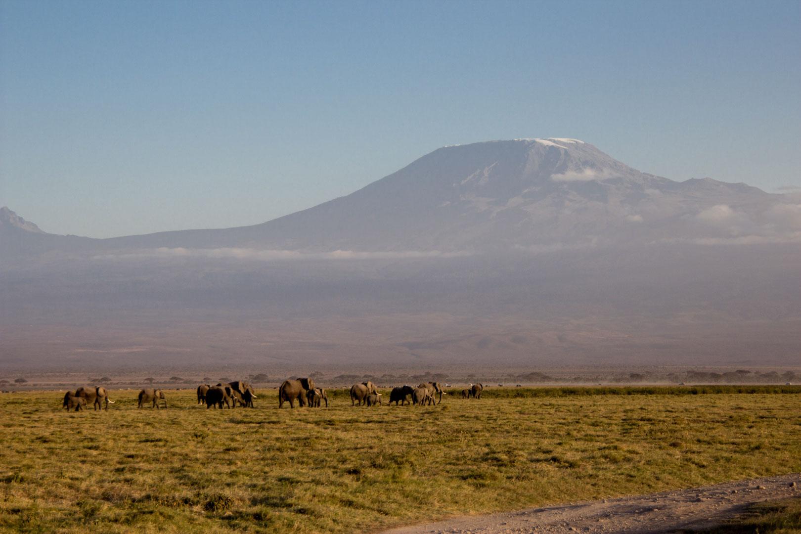 Manada de elefantes y monte Kilimanjaro, Parque Nacional de Amboseli, Kenia