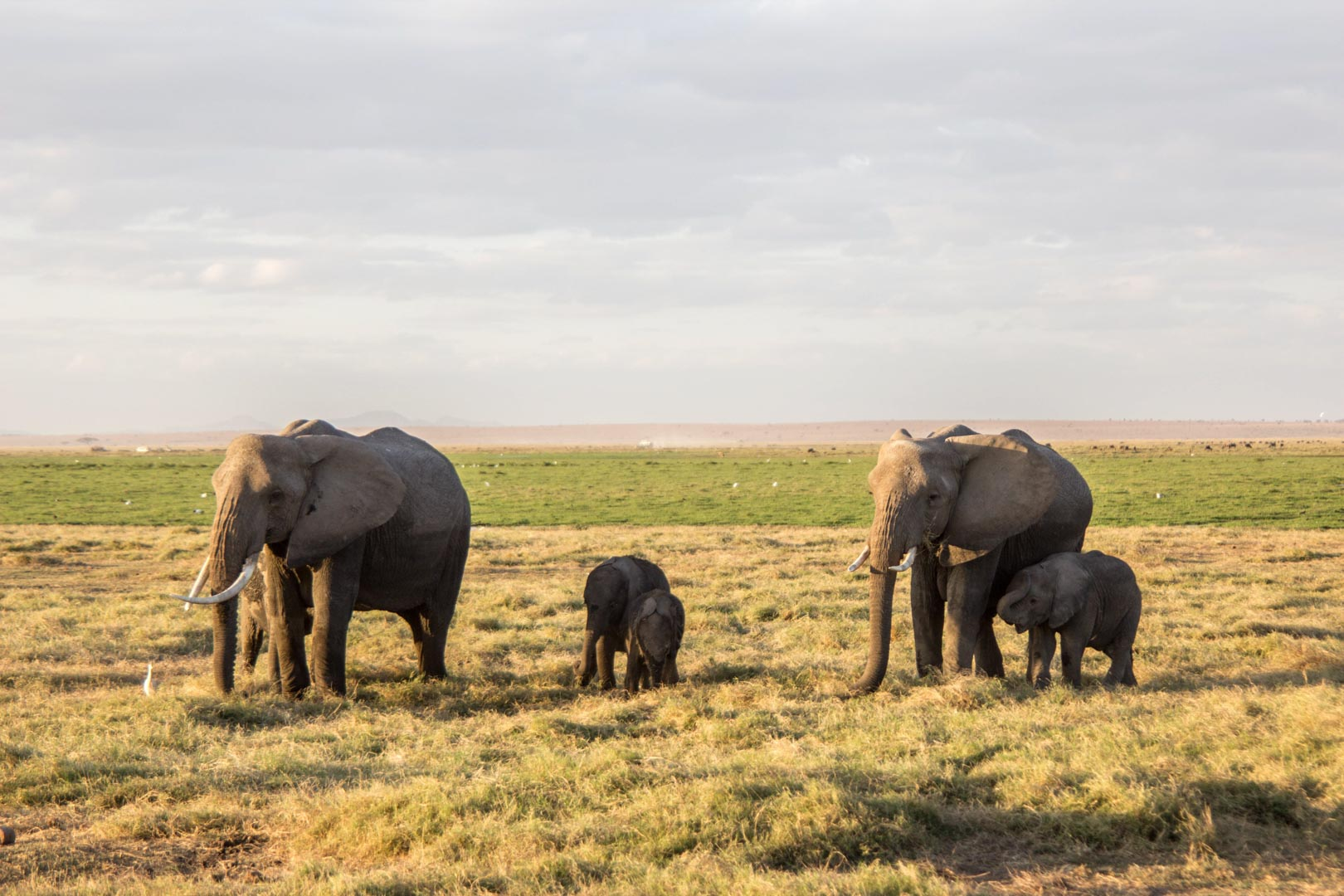 Manada de elefantes, Parque Nacional de Amboseli, Kenia