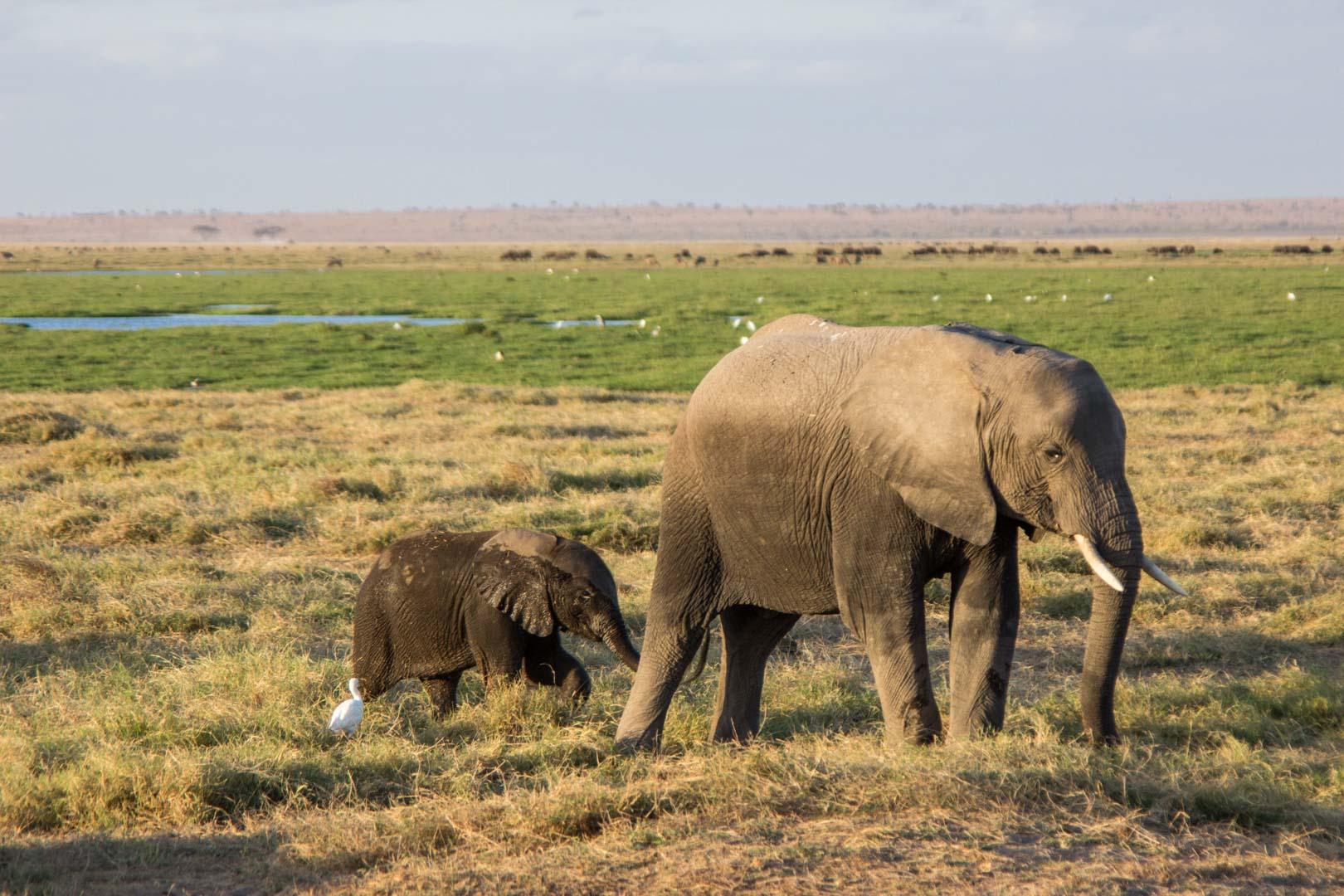 Bebé elefante con su mamá, Parque Nacional de Amboseli, Kenia