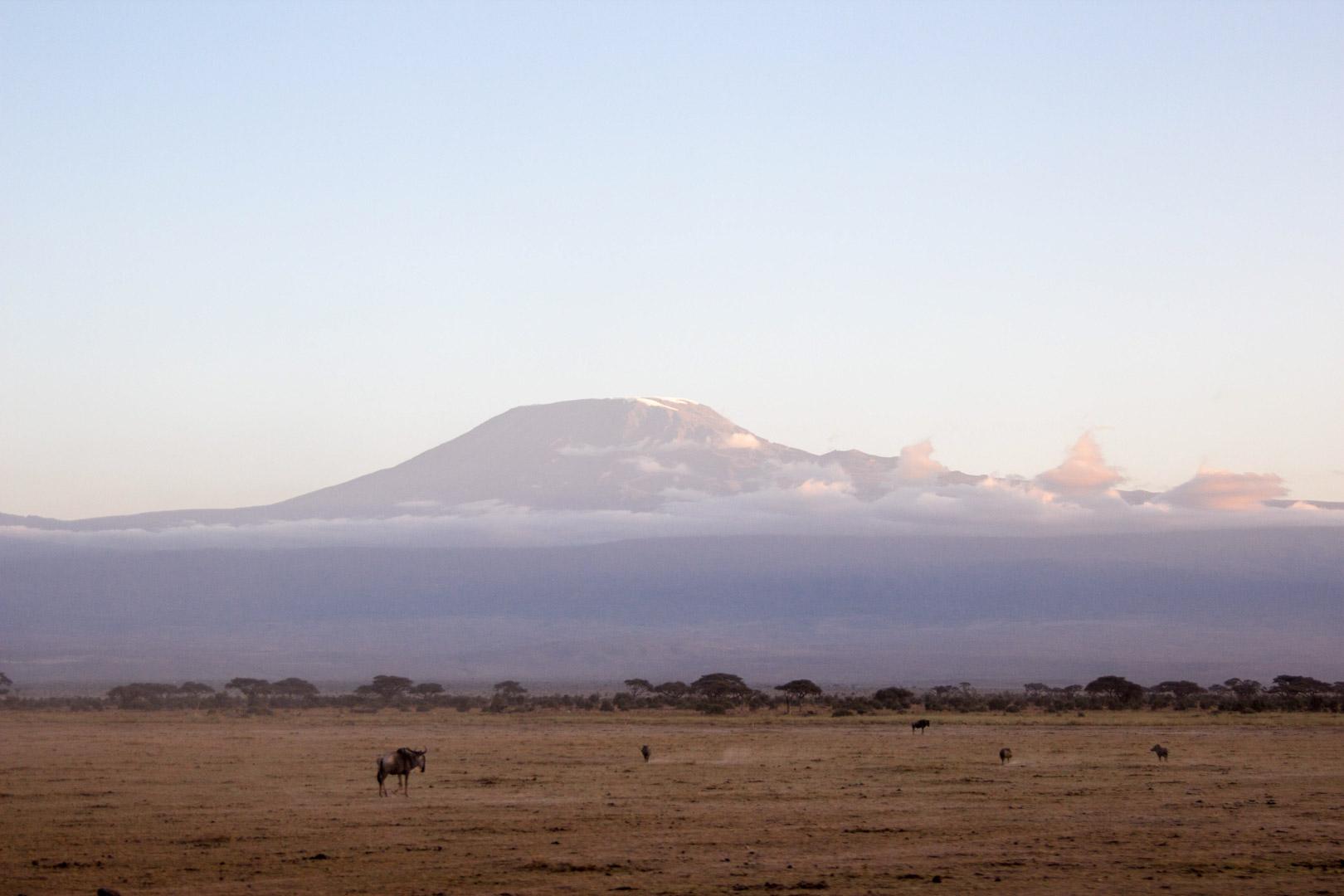 Monte Kilimanjaro, Parque Nacional de Amboseli, Kenia
