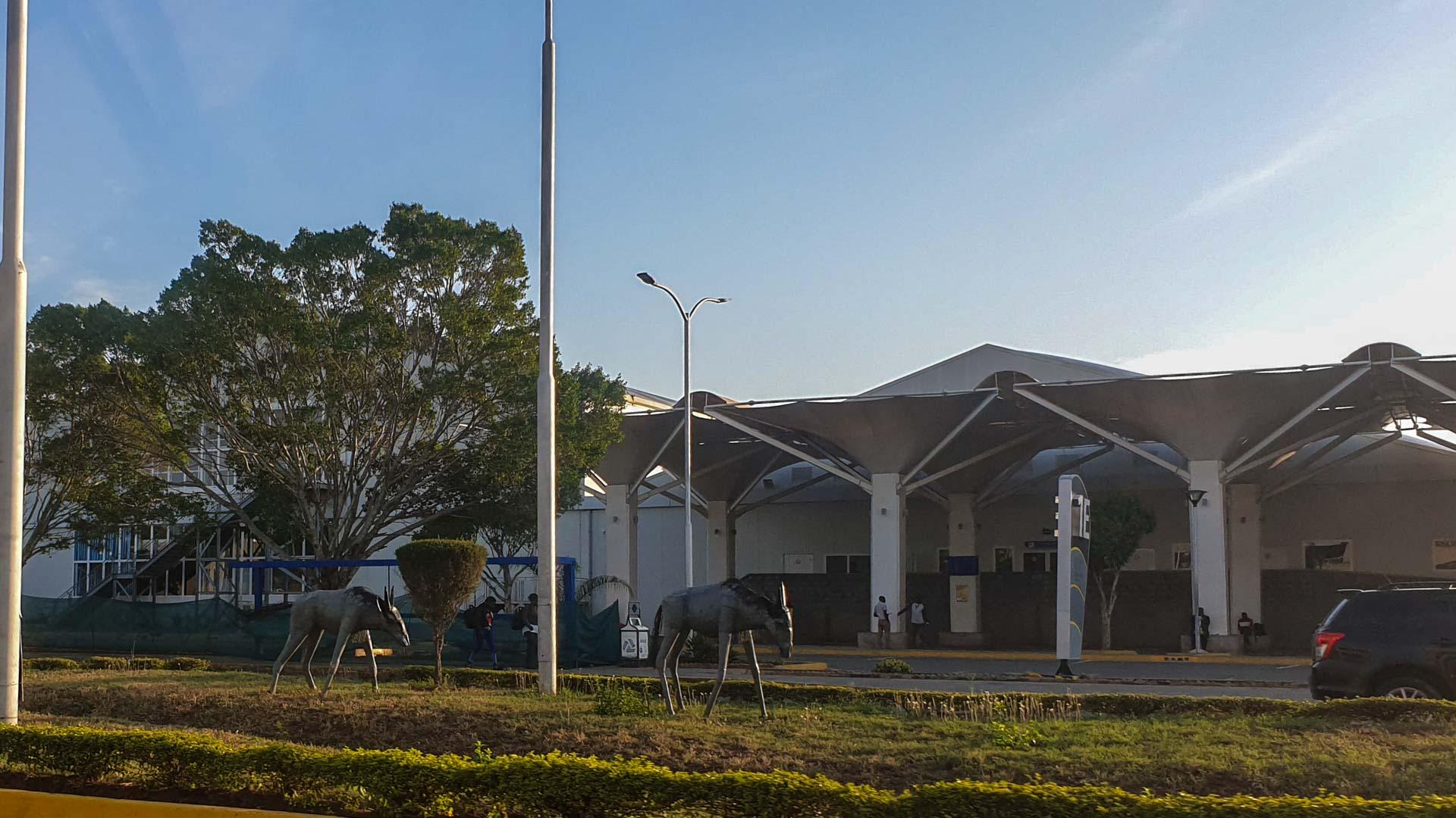 Gacelas en el Aeropuerto Internacional Jomo Kenyatta, Nairobi, Kenia