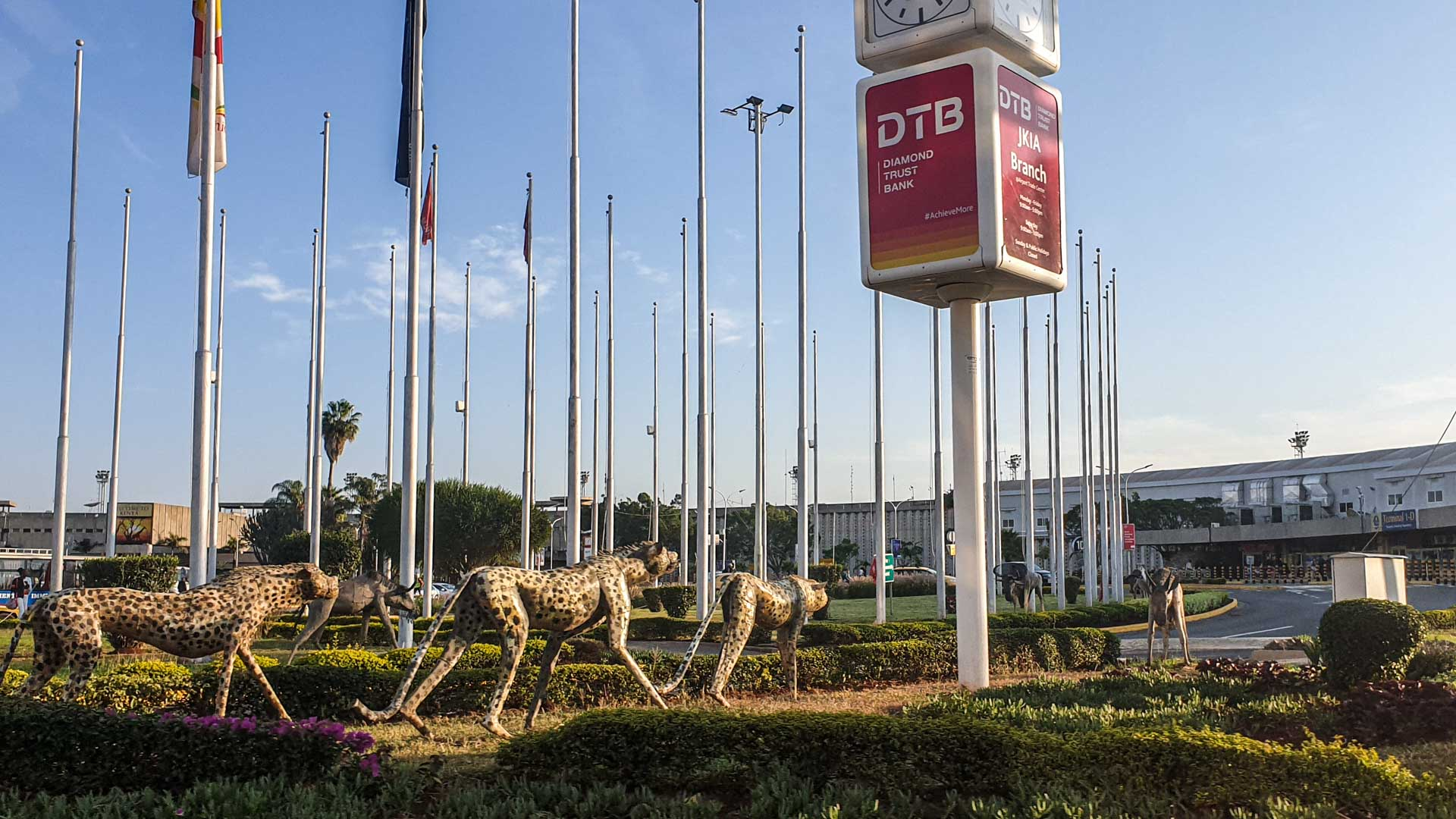 Guepardos en el Aeropuerto Internacional Jomo Kenyatta, Nairobi, Kenia