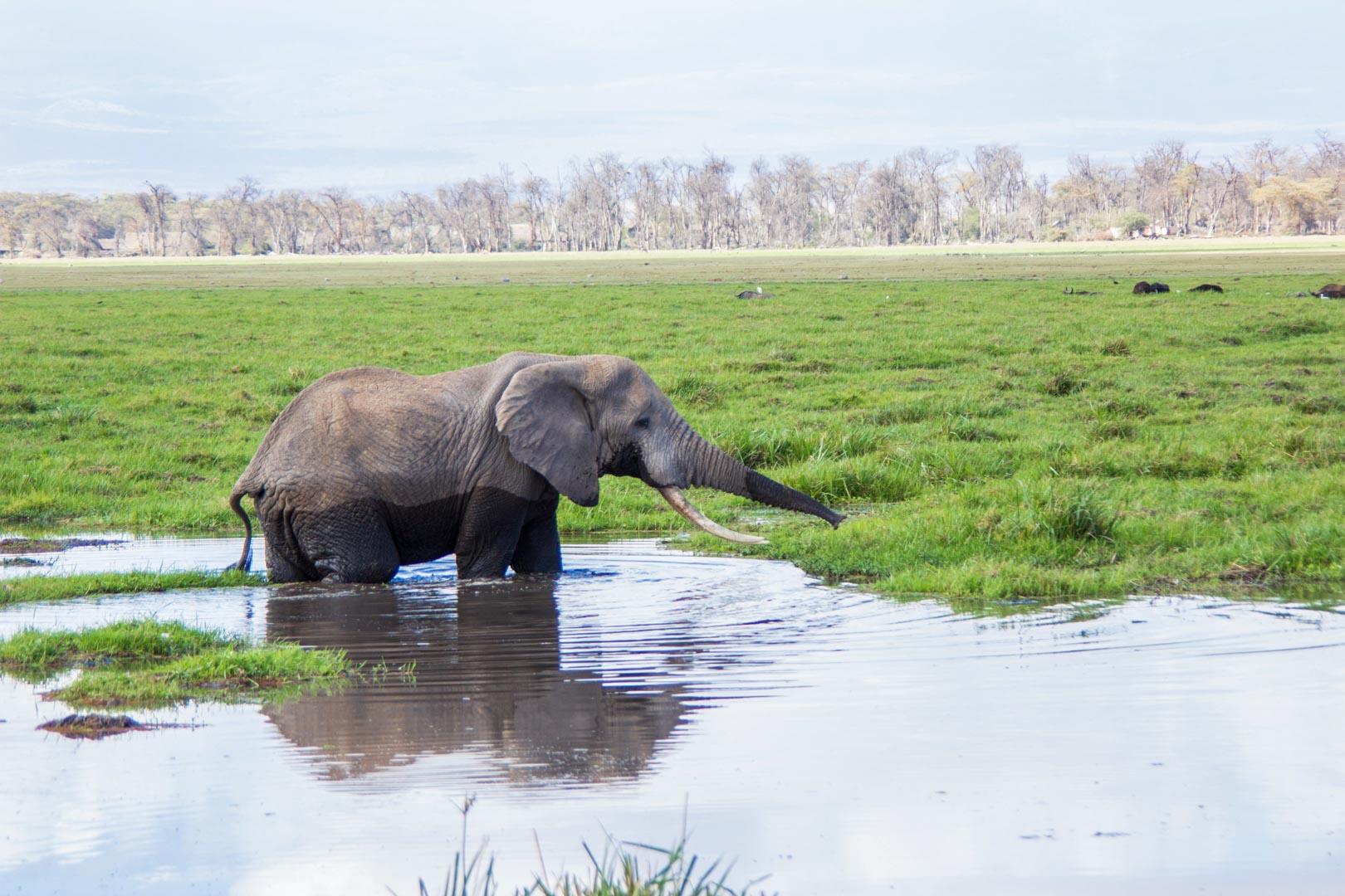 De safari por Amboseli. El paraíso de los elefantes