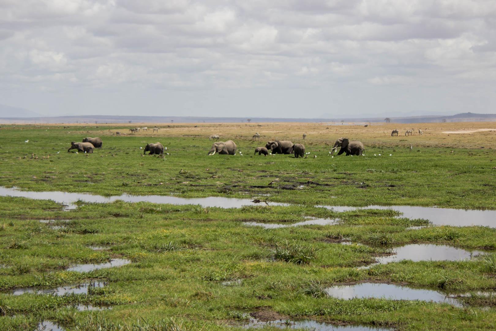 Manada de elefantes disfrutando del baño, Amboseli, Kenia