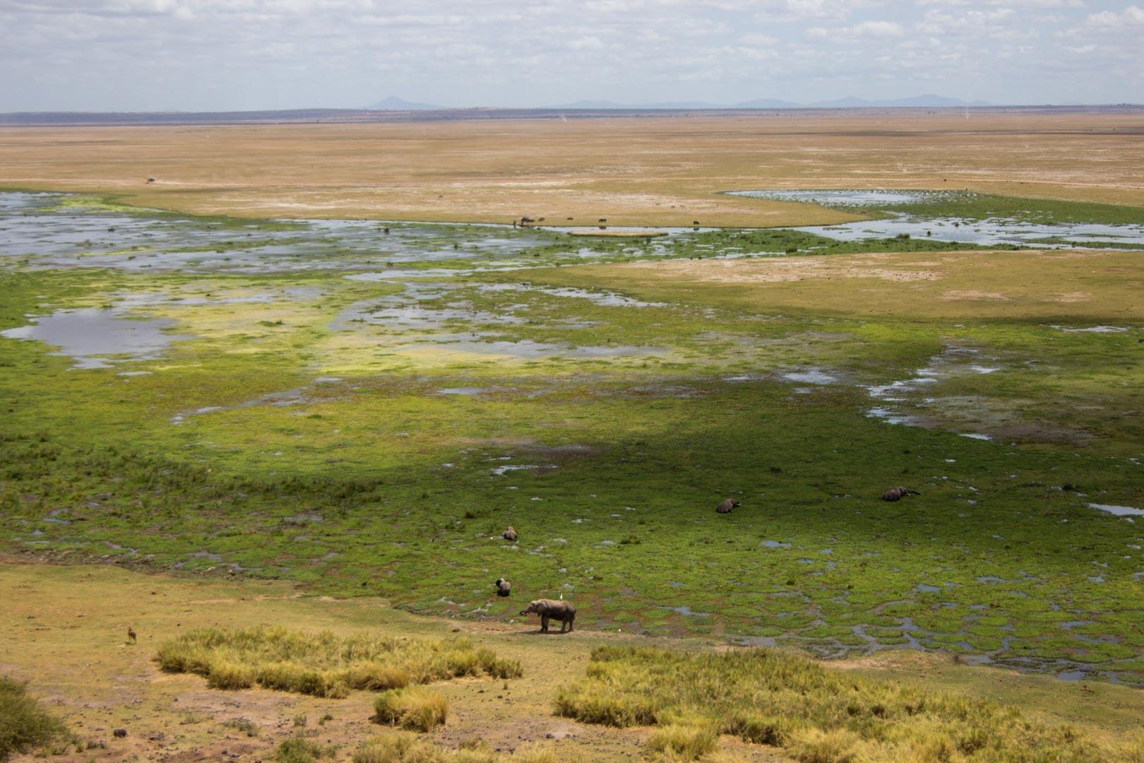 De safari por Amboseli en Kenia. El paraíso de los elefantes
