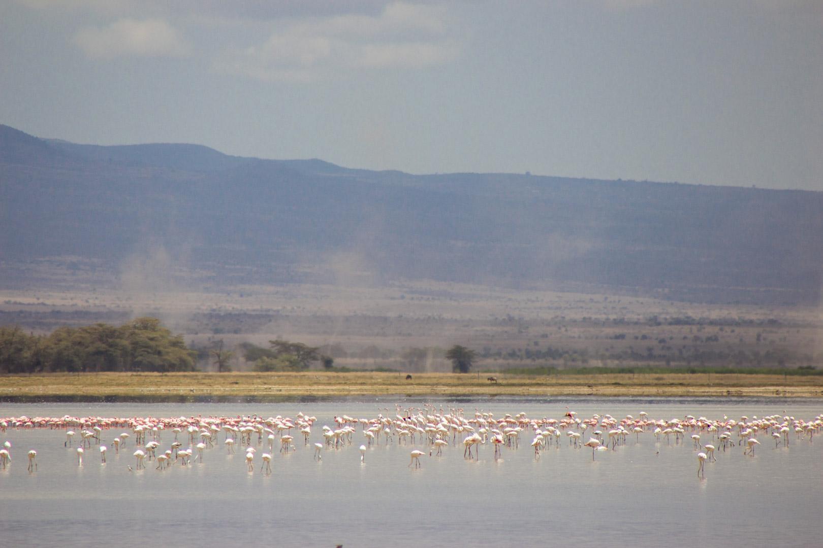 Flamencos en Amboseli, Kenia