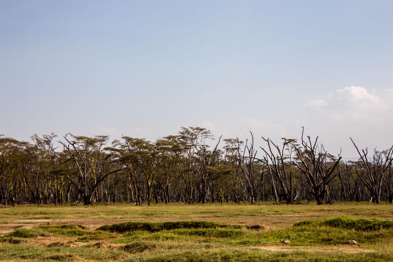 Alrededores de Lago Nakuru, Kenia