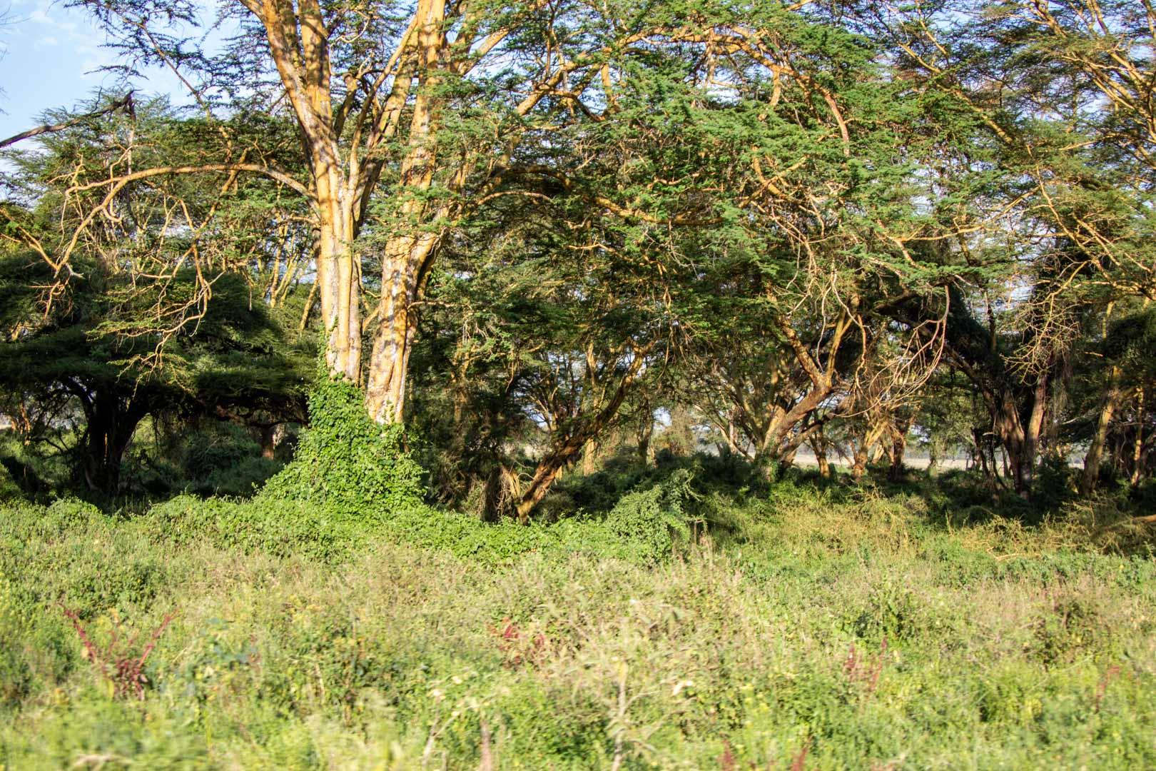 Parque Nacional Lago Nakuru, Kenia