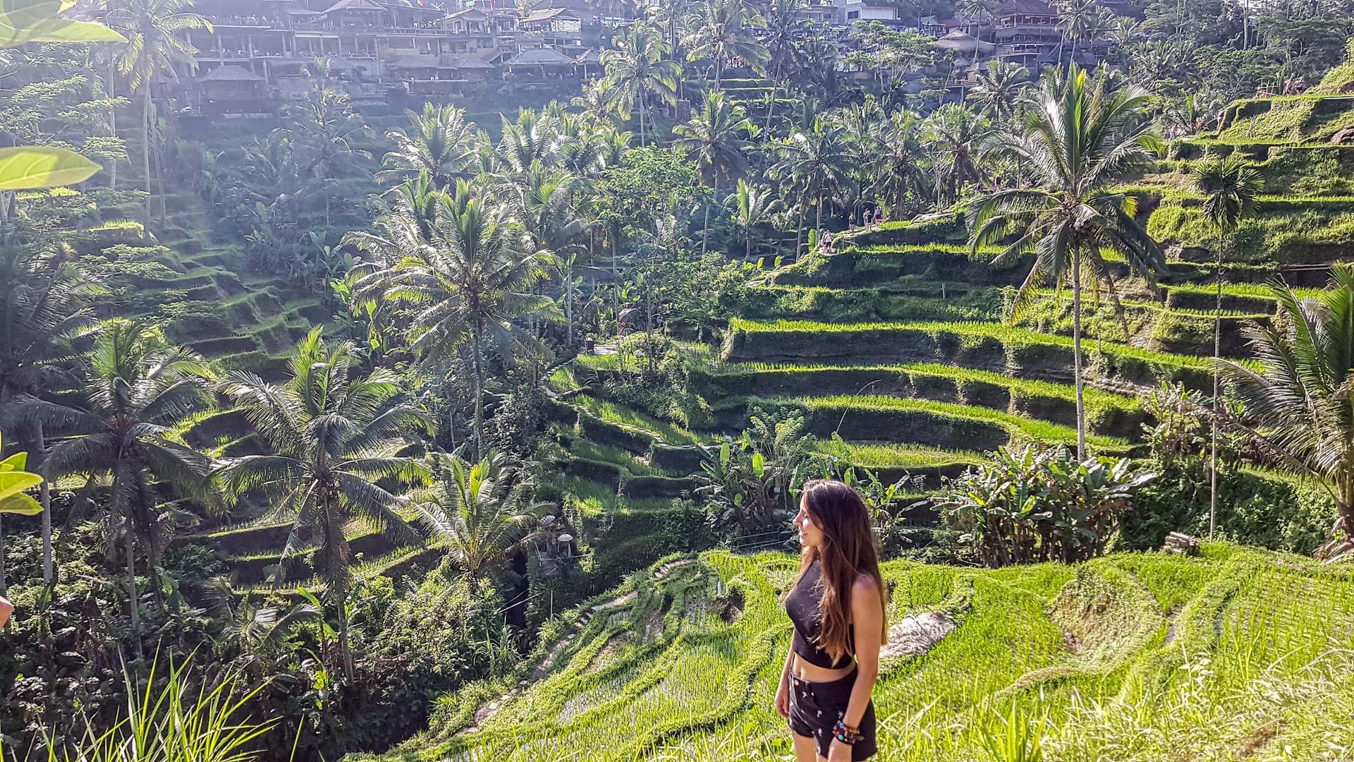 Terrazas de arroz de Tegalalang, Bali, Indonesia