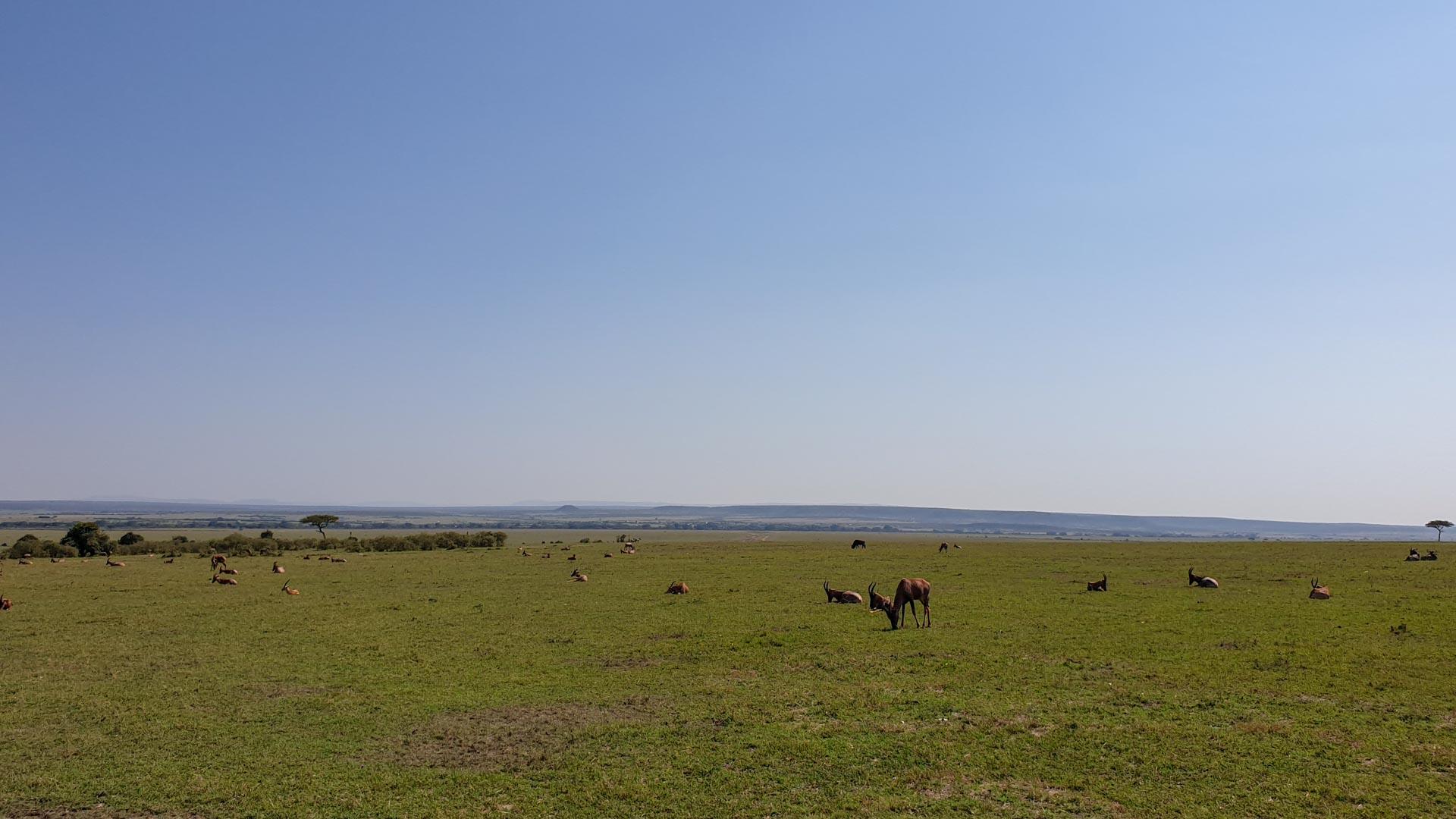 Gacelas e impalas en Masai Mara, Kenia