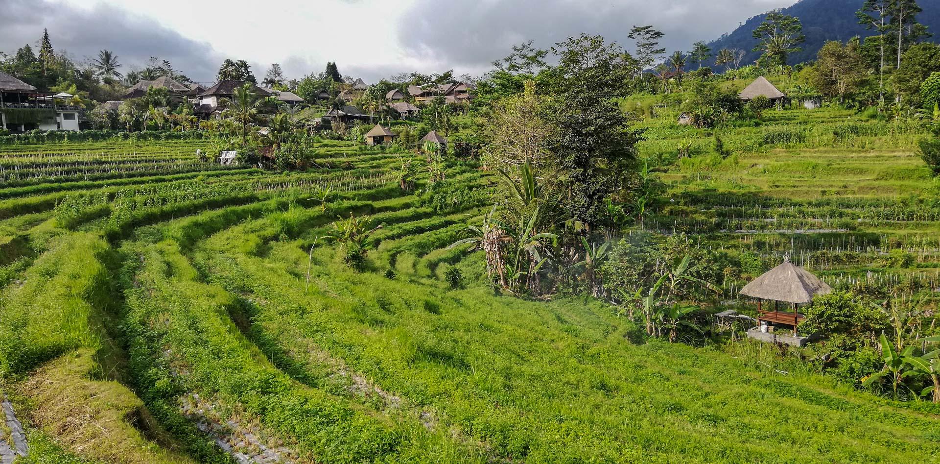 Vistas desde nuestra villa en Abian Ayu Villa, Sidemen, Bali