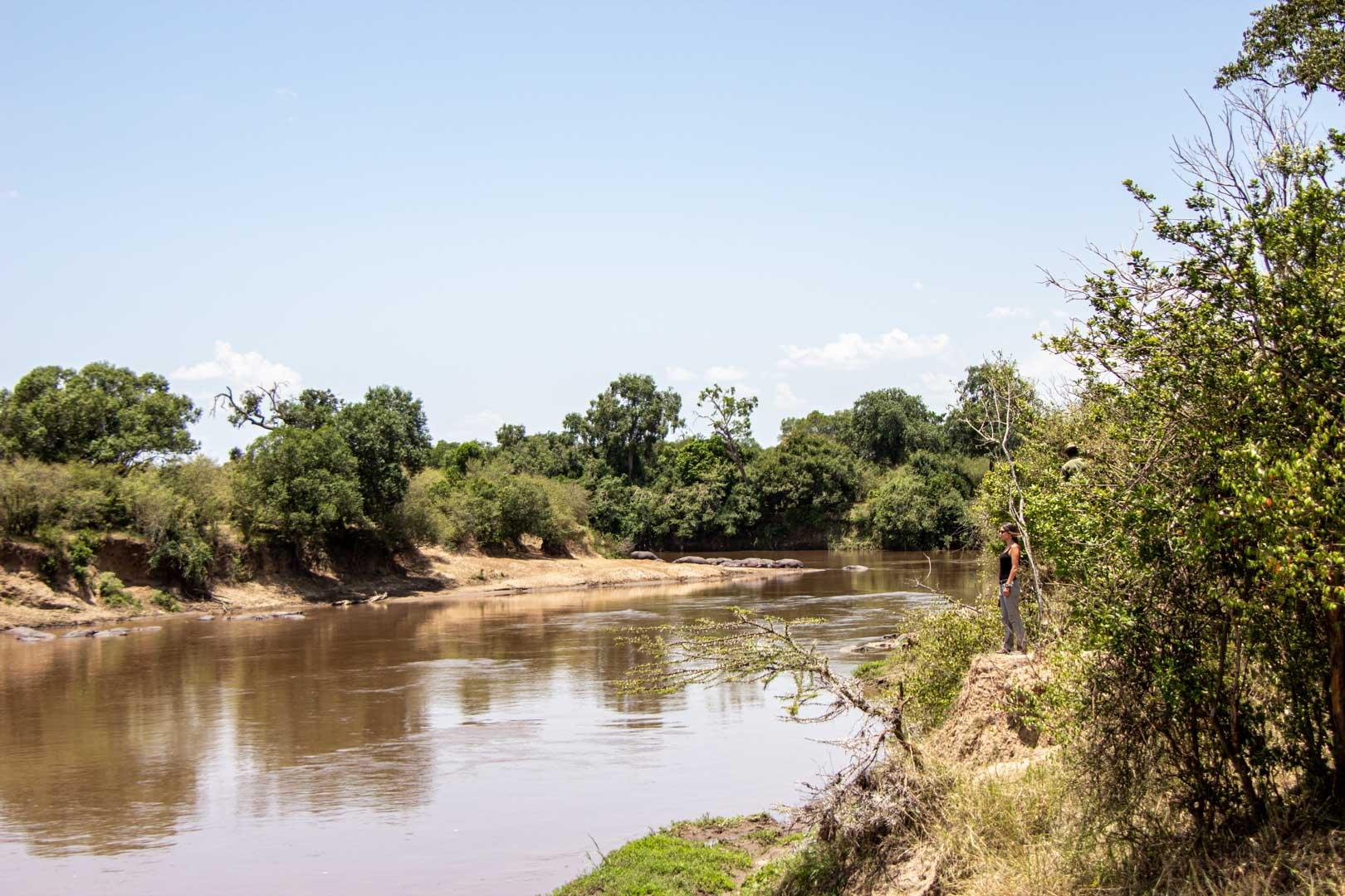 Disfrutando de las vistas de los hipopótamos en el río Mara, Masai Mara, Kenia