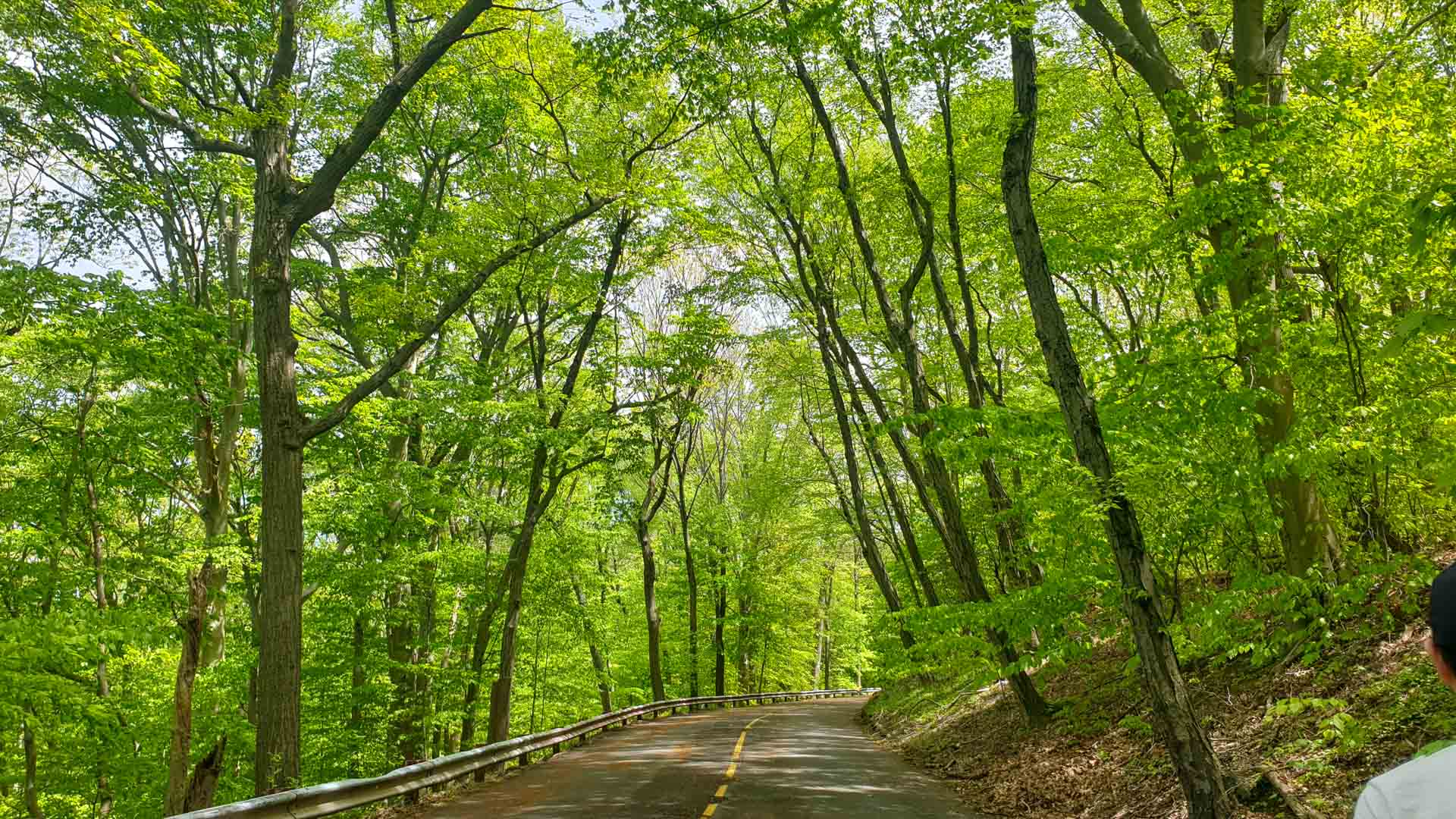 Carreteras vacías en East Rock Park, New Haven, Connecticut