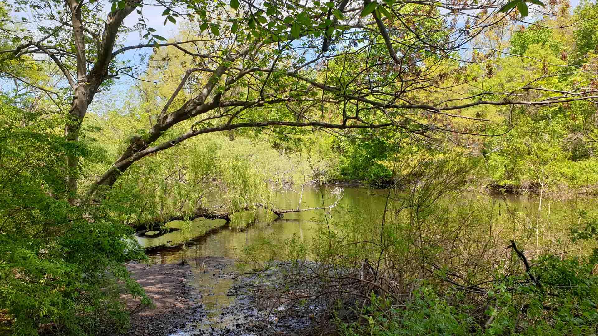 Río Mill en East Rock Park, New Haven, Connecticut