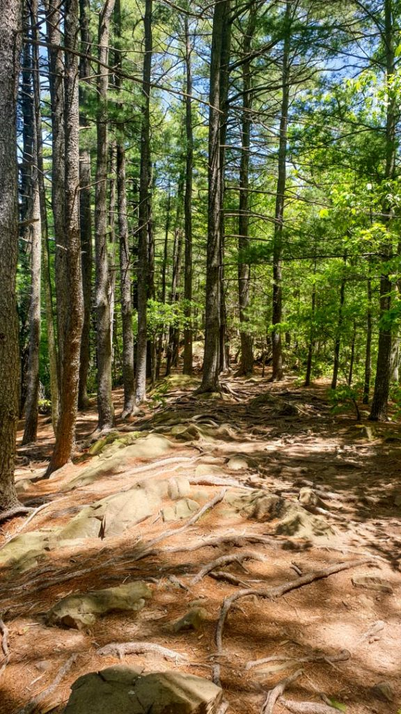 Camino cercano a Lake Wintergreen en West Rock State Park, New Haven, Connecticut