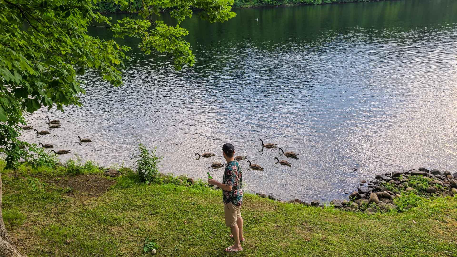 Patos en el río Hudson, Lake Luzerne, Nueva York