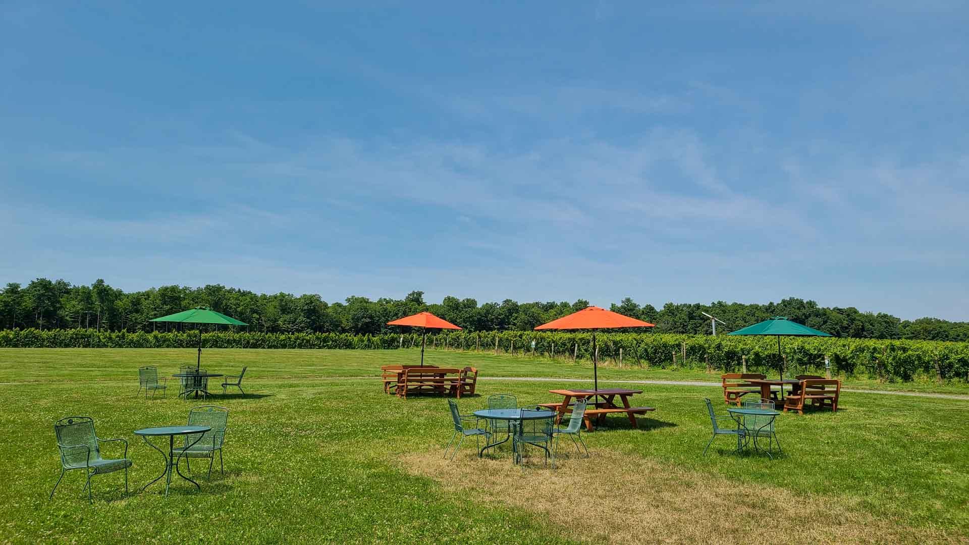 Viñedos en Seneca Lake Wine Trail, Finger Lakes, Nueva York