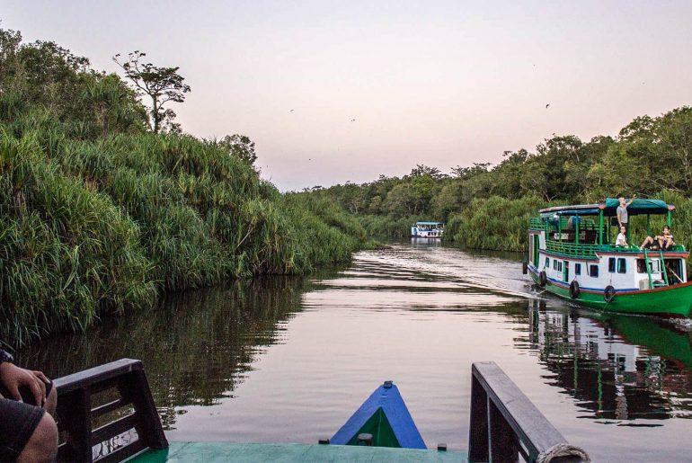 klotok en la selva de Borneo
