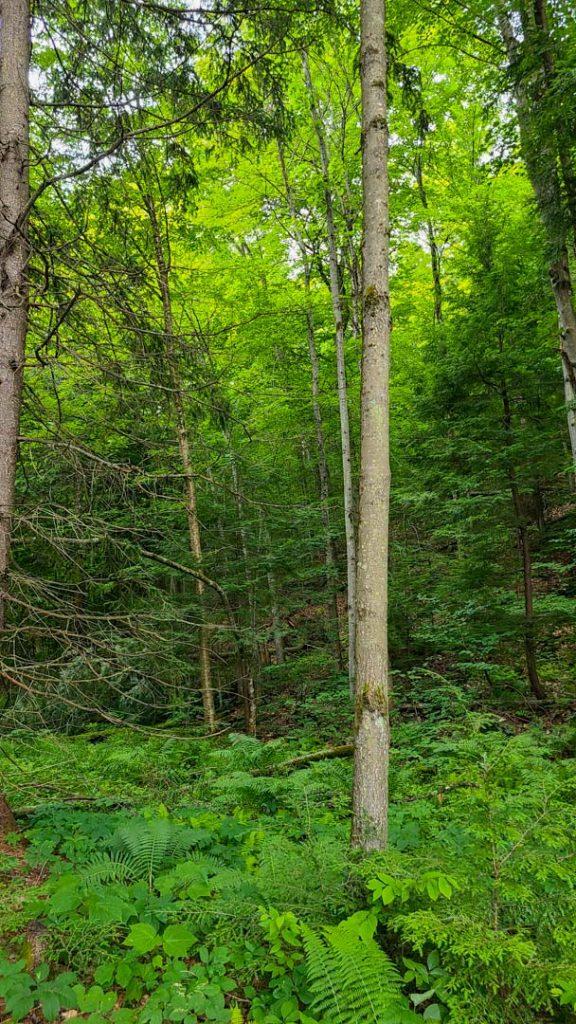 Ruta por Corinth Reservoir Recreation Area, Adirondack, Nueva York