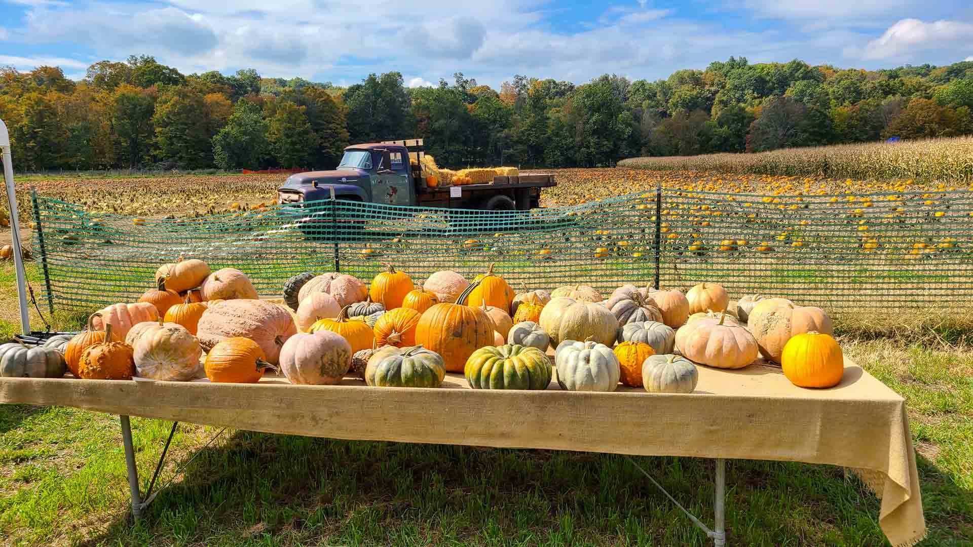 Puesto de calabazas en The Farm, Woodbury, Connecticut
