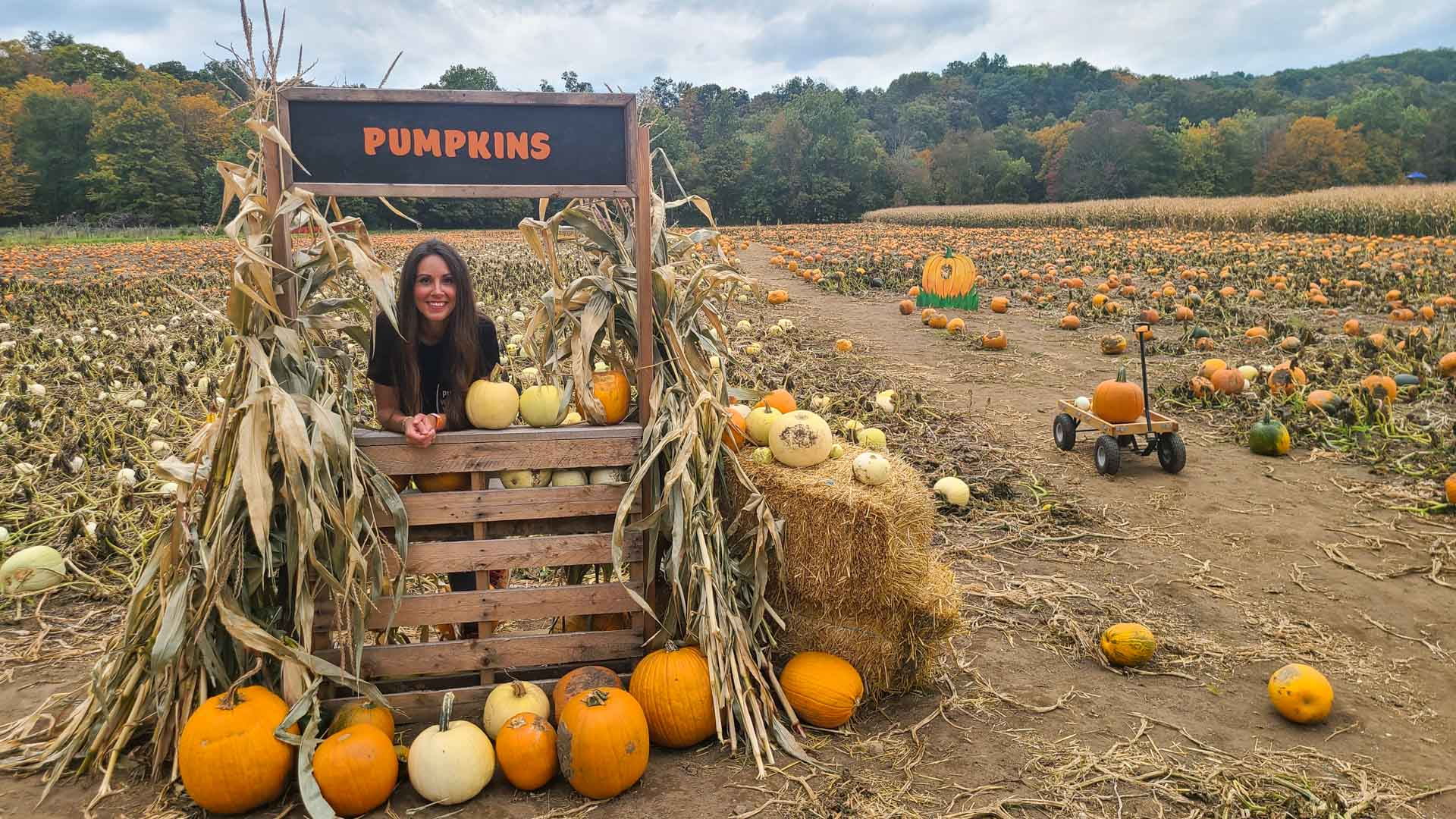 Huerto de calabazas en The Farm, Woodbury, Connecticut